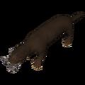 Miocene African Otter (Enhydriodon dikikae).png