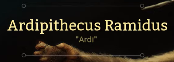Ardipithecus ramidus2.png