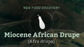 Miocene African Drupe.png