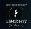 Elderberry.png
