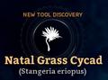 NatalGrassCycad-n.png