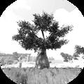 Evolution Feat - Savannah Master Explorer.png