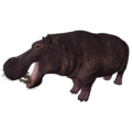 Hippopotamus (Hippopotamus gorgops).png