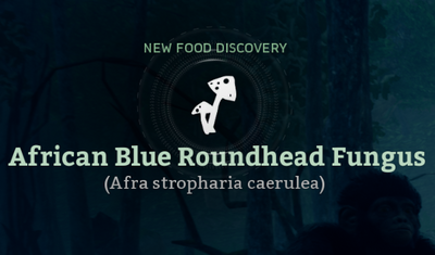 African Blue Roundhead Fungus (Afra stropharia caerulea).png