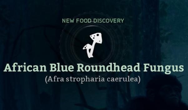 African Blue Roundhead Fungus (Afra stropharia caerulea).png