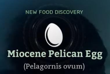 Miocene Pelican Egg.png