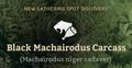 Black Machairodus Carcass.png