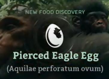 Pierced Eagle Egg.png