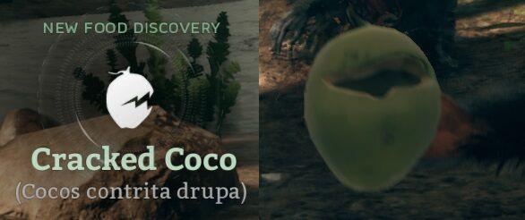 Cracked Coco (Cocos contrita drupa).jpg