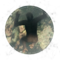Ardipithecus Ramidus - Autotelic Personality - BB ZO 01.png