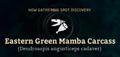 Eastern Green Mamba Carcass.png