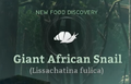 Giant African Snail.png