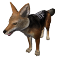 Black-Backed Jackal (Canis mesomelas).png