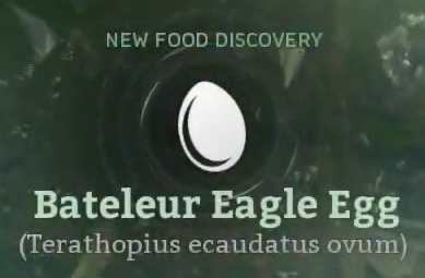 Bateleur Eagle Egg.png