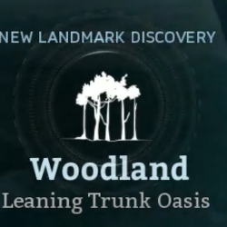 Leaning Trunk Oasis