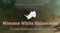 Miocene White Rhinoceros.png