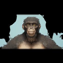 Species Headshot 1.png