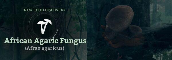 African Agaric Fungus (Afrae agaricus).jpg