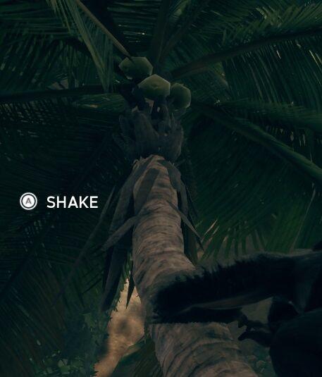 Coconut Tree shake.jpg