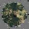 Ardipithecus Ramidus - Autotelic Personality - BB ZO 03.png