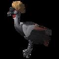 Grey Crowned Crane (Balearica regulorum).png