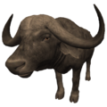 African Buffalo (Syncerus caffer).png