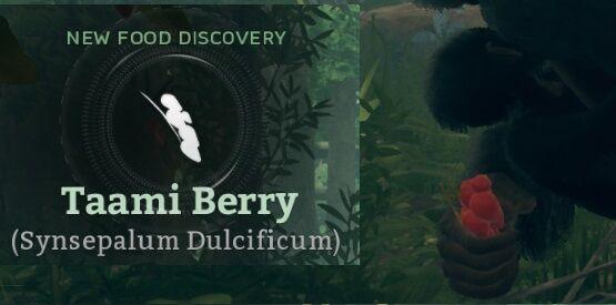 Taami Berry (Synsepalum Dulcificum).jpg