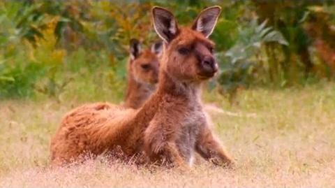 Kangaroo_Island,_Australia_-_Lonely_Planet_travel_video