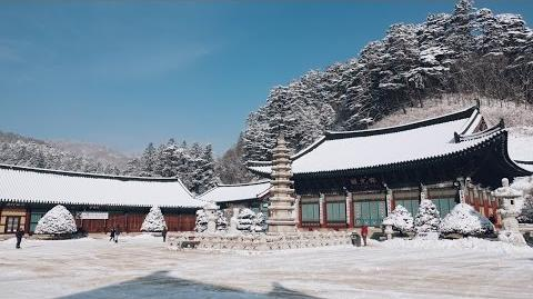 월정사 Woljeongsa Temple 한국여행 korea trip winter trip 눈꽃여행