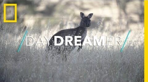 Welcome_to_the_Wild_World_of_Kangaroo_Island_National_Geographic