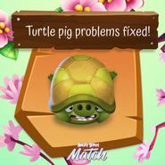 Cerdo Tortuga Promocional 1