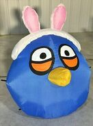 Easter Jay