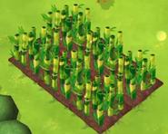 Каникулыбамбуковыегрядки