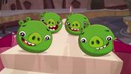 CUTIE PIGS
