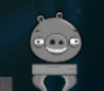 Grey Pig4