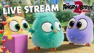 Angry Birds Movie 2 Live Stream Hatchlings