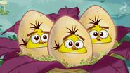 -Egg Sounds Hatchlings 3