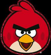 Red front beak open copy