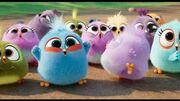 THE_ANGRY_BIRDS_MOVIE_2_-_Brilliant_(Now_Playing)