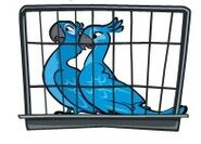 Голубчик и Жемчужинка в клетке