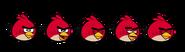 Red bird spirites