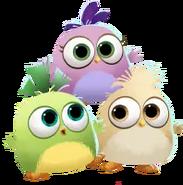 ABPOP Hatchlings