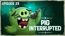 Pig Interrupted.jpg