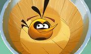 Angry-birds-new-bird-hamoween