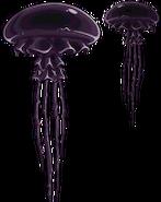 Pig Dipper Jellyfish