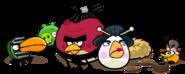 Birds-bottom-about