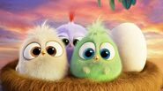 Hatchlings (Nest)