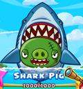 SharkPig