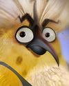 Flocker Yellow Portrait 023.png