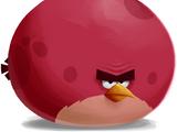 Angry Birds Ultimate (ComboLuigi2000)/Birds and Allies